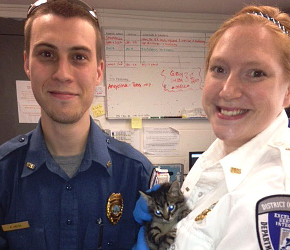 Kitten Rescued From Metro Tracks