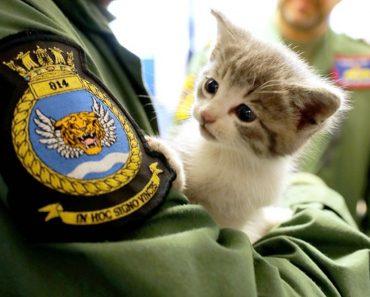 Kitten Survives 300-Mile Car Journey!