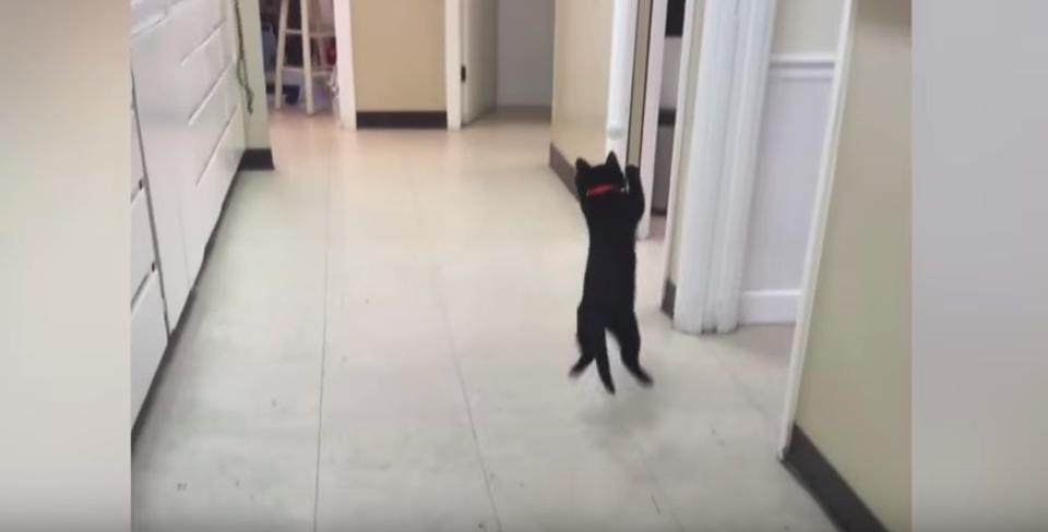 In Just A Few Seconds This Kitten Will Make You Laugh