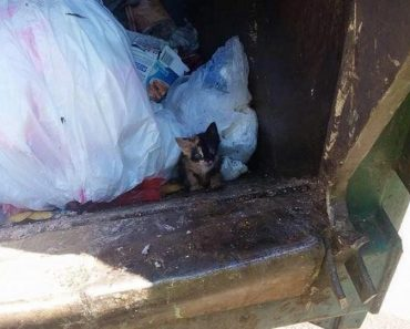 From Trash To Treasure. Calico Kitten Thrown As Garbage, Rescued By Garbage Man