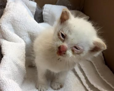 Kitten Survives After Being Thrown Out Of A Moving Car