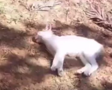 A Tiny Kitten Fell From A Huge Building… Look At Him Now