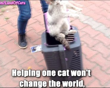 Be The Change You Want To See In The World!