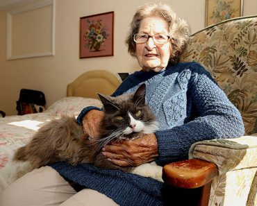 Cat Tracks The Owner That She Was Separated With In A Nursing Home