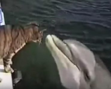 Unexpected Friendship Between A Cat And A Dolphin!