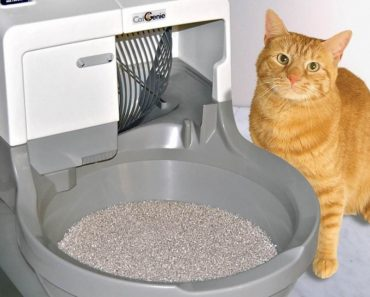 How To Control Litter Box Odor!