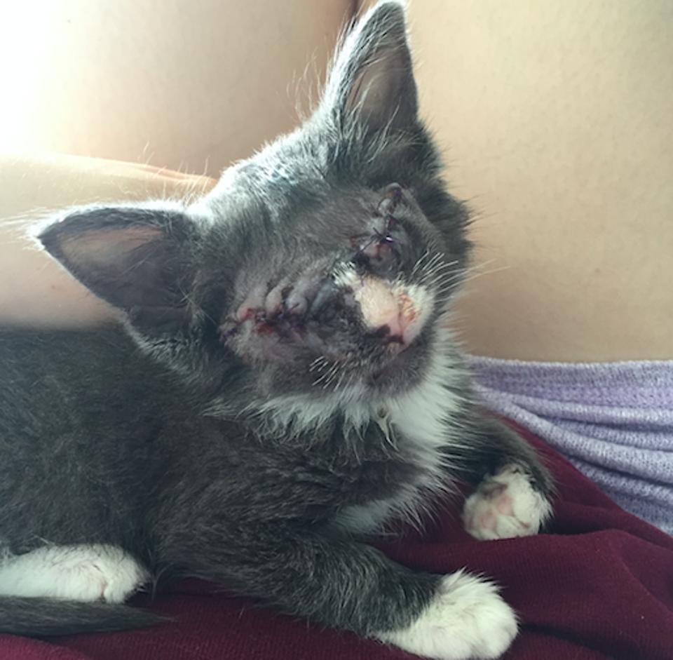 Rescue Kitten Who Had Both Eyes Removed Is Learning What Love Means