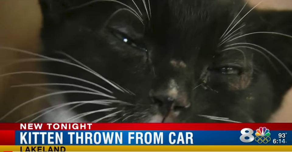 Kitten Thrown From A Moving Car Rescued By A Firefighter!