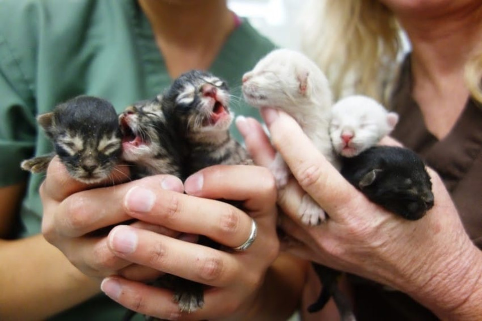 Tiny Kittens Abandoned In A Dumpster