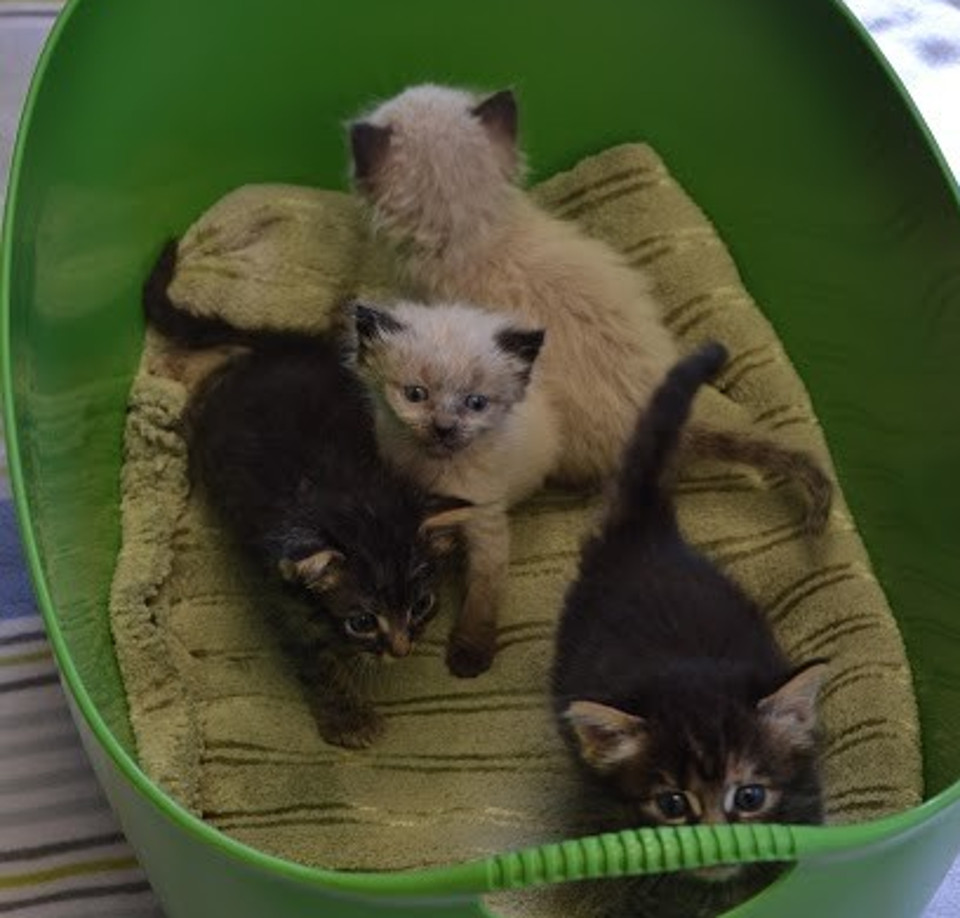 kittens from dumpster after one month