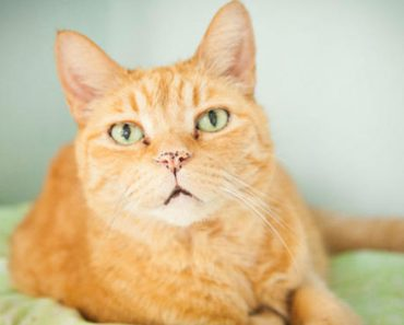 Senior Cat Is Enjoying His Golden Years After He Received A Second Chance