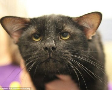 Meet Batman, The Four Eared Kitty!