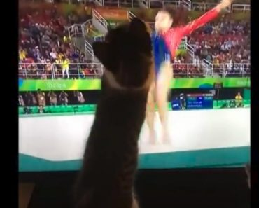 Kittens Try To Help Gymnast At The Olympics With Their Paws!