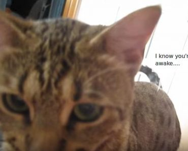 This Cat Has A Funny Way To Wake Up Her Human Every Morning