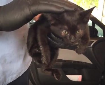 Kitten Rescued From Police Vehicle Grille!