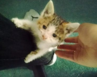 Biker Saves Kitten From Busy Traffic And Becomes Her Forever Dad