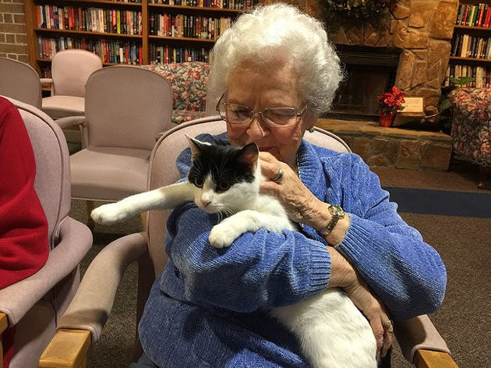 Older Cats Might Be Able To Make Amazing Connections With Older People