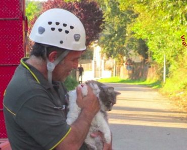Cat Found Alive Under Rubble After 32 Days After An Earthquake In Italy