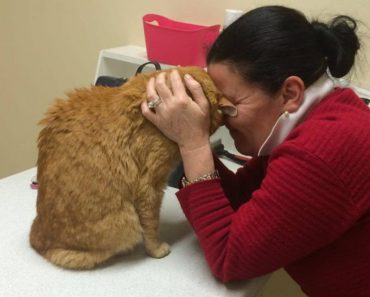 After Being Lost in Australia, Senior Cat Reunites With His Mom In Ireland!