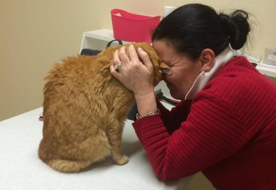 cat flea treatment review