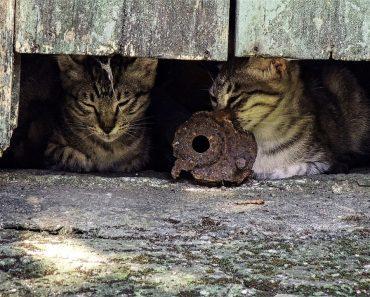 New Book Calls for Removal of Outdoor Cats 'By Any Means'…