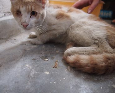 Helpless Cat Who Was Unable To Stand Made An Amazing Transformation