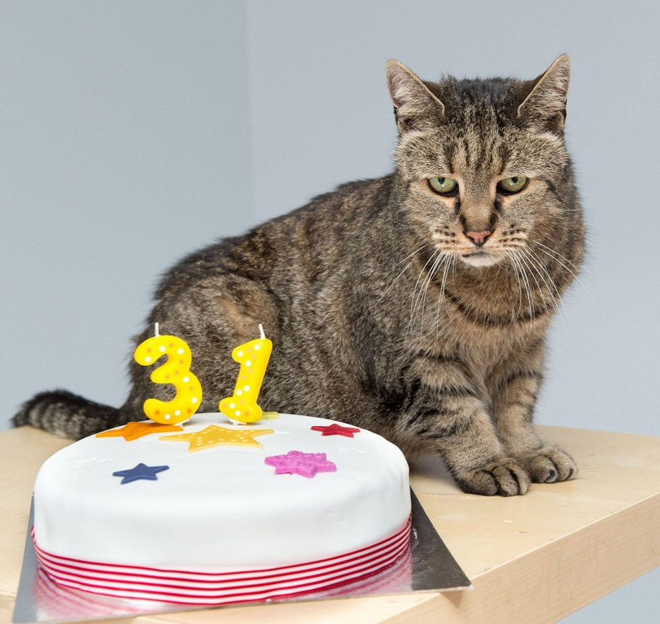 Cat Celebrated His 31-Year-Old  Birthday!