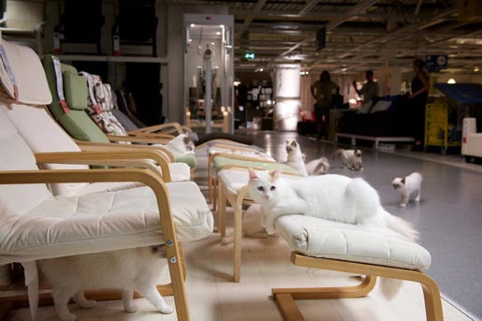 IKEA Releases 100 Cats Into A Store And The Result Is Beautiful