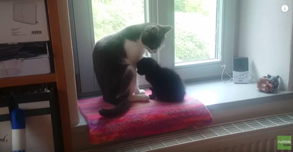 Kitten Who Was Found Abandoned On A Field Bonds With Family Cat