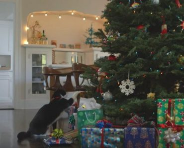 Who Invented Christmas? Was It A Cat?