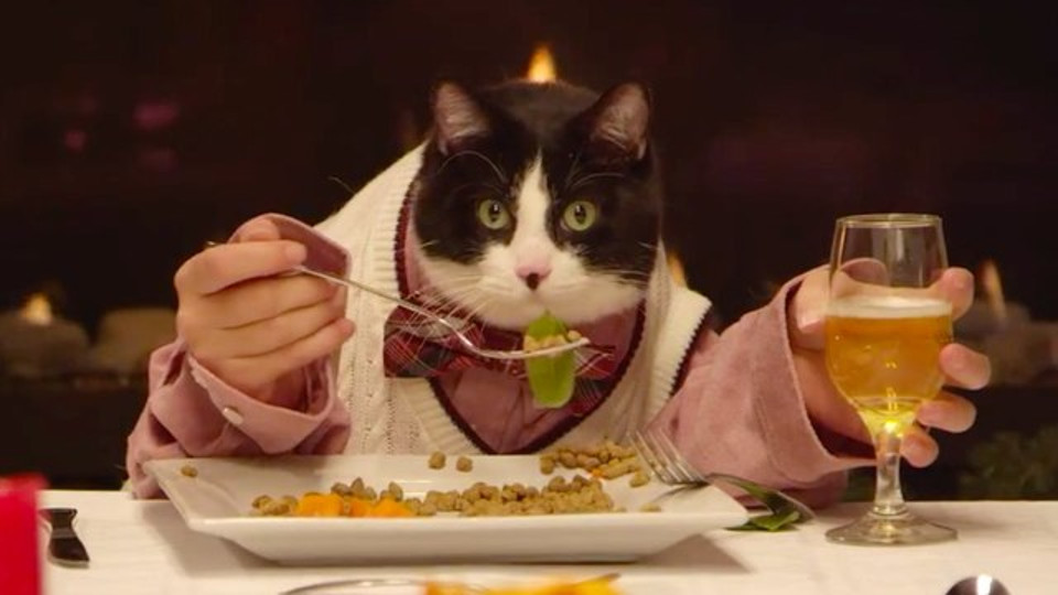 Cat Invites His 13 Dog Friends To A Very Stylish Dinner!