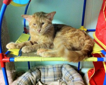 Special Blind Cat With Four Ears Has So Much Love To Give