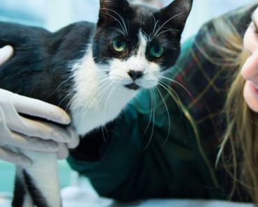 Cat Missing For Seven Years Comes Back Home On Christmas