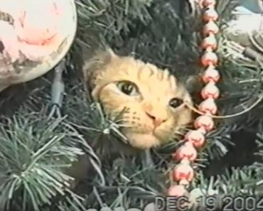 Cat Completely Ignores His Human When She Is Asking Him To Get Off The Tree!