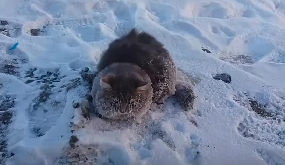 Cat Who Literally Froze To The Ground Was Rescued By Locals
