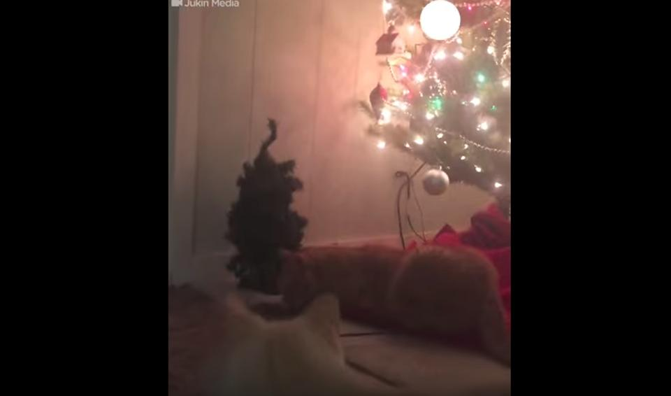 Cats Not A Fan Of Christmas Prank!