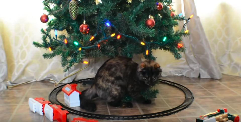 Cats vs. Christmas Trees!