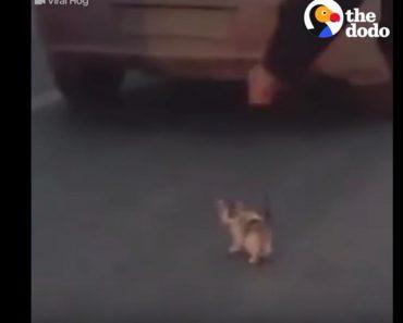 Guy Saves Kitten On Highway!