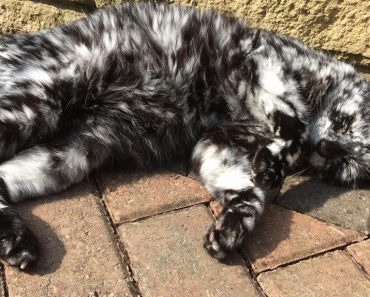 His Fur Transformed From Completely Black To Flecked With White!
