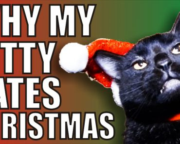 This Kitty Cat Hates Christmas!