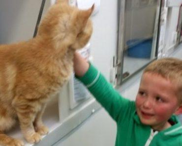 Little Boy Burst Into Tears When he Found His Long-Lost Feline Friend