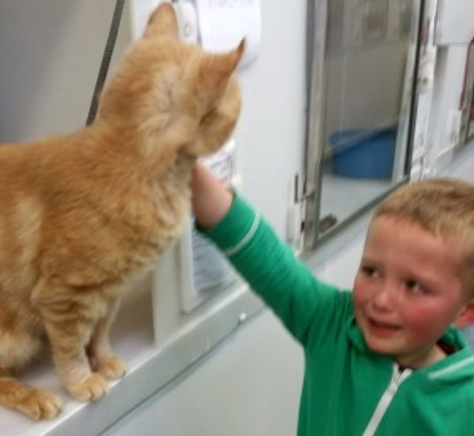 Little Boy Burst Into Tears When he Found His Long-Lost Feline Friend