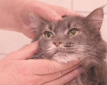 Cat With Half A Brain Astounds Veterinarians In Poland!