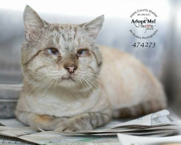 FIV+ Cat Gets A Second Chance At Life