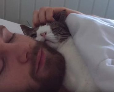 The Best Reason Why You Should Adopt A Shelter Cat!