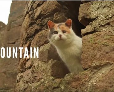 Stevie The Blind Cat Climbed A Mountain!