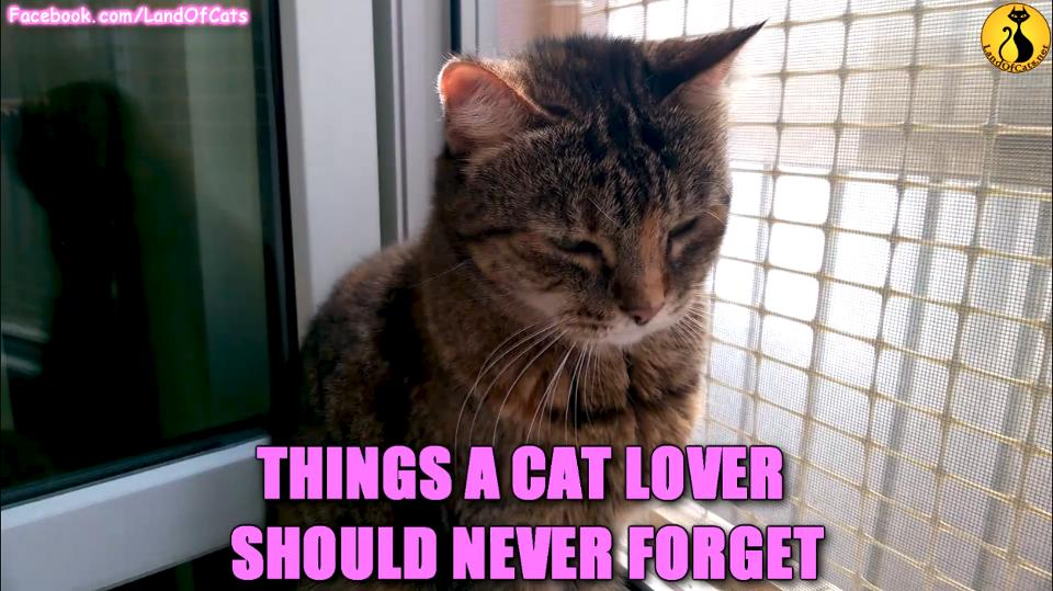 Things A Cat Lover Should Never Forget