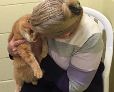 Woman Adopts Shelter Senior Cat, Then Goes Back For His Best Friend
