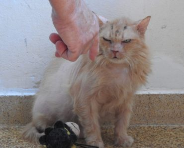 Abandoned At 17 – New Beginning For An Elderly Cat