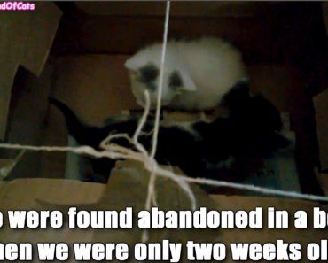 Kittens Found Abandoned In A Box Got A Second Chance At Life!